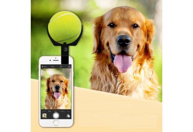 Kutya selfie